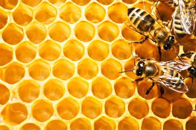 爲什麽野花牌綠蜂膠被世界公認品質最高