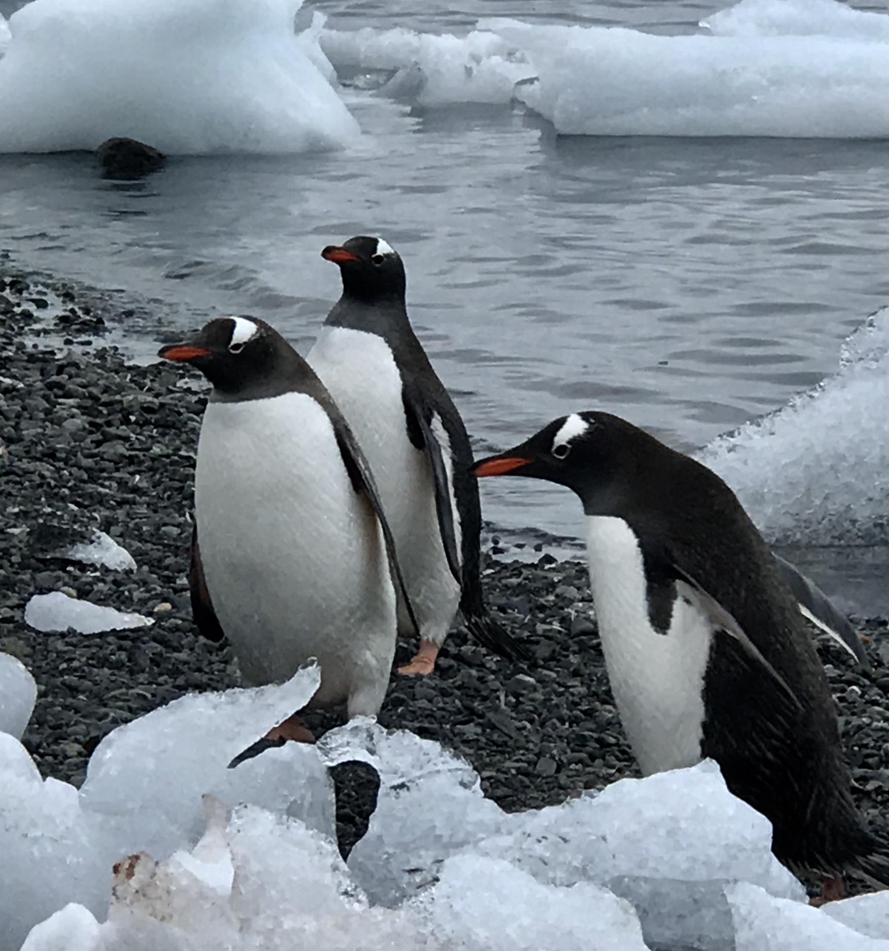 南极,我要落地 (五)  文 / 吕华青