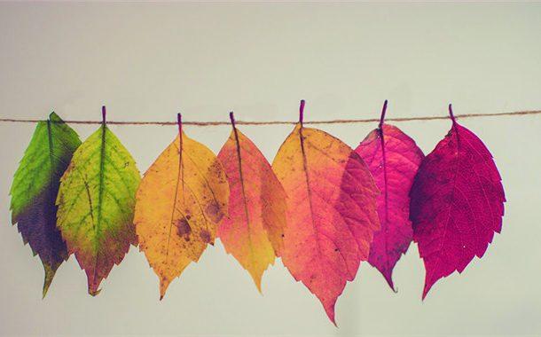 【OTTAWA天天中文学校作文选登】我爱美丽的秋天