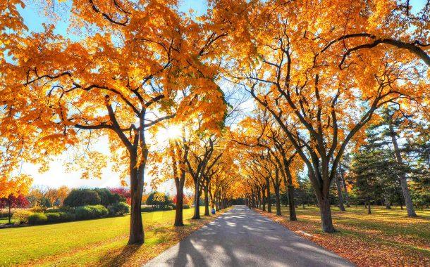 【OTTAWA天天中文学校作文选登】秋天来了